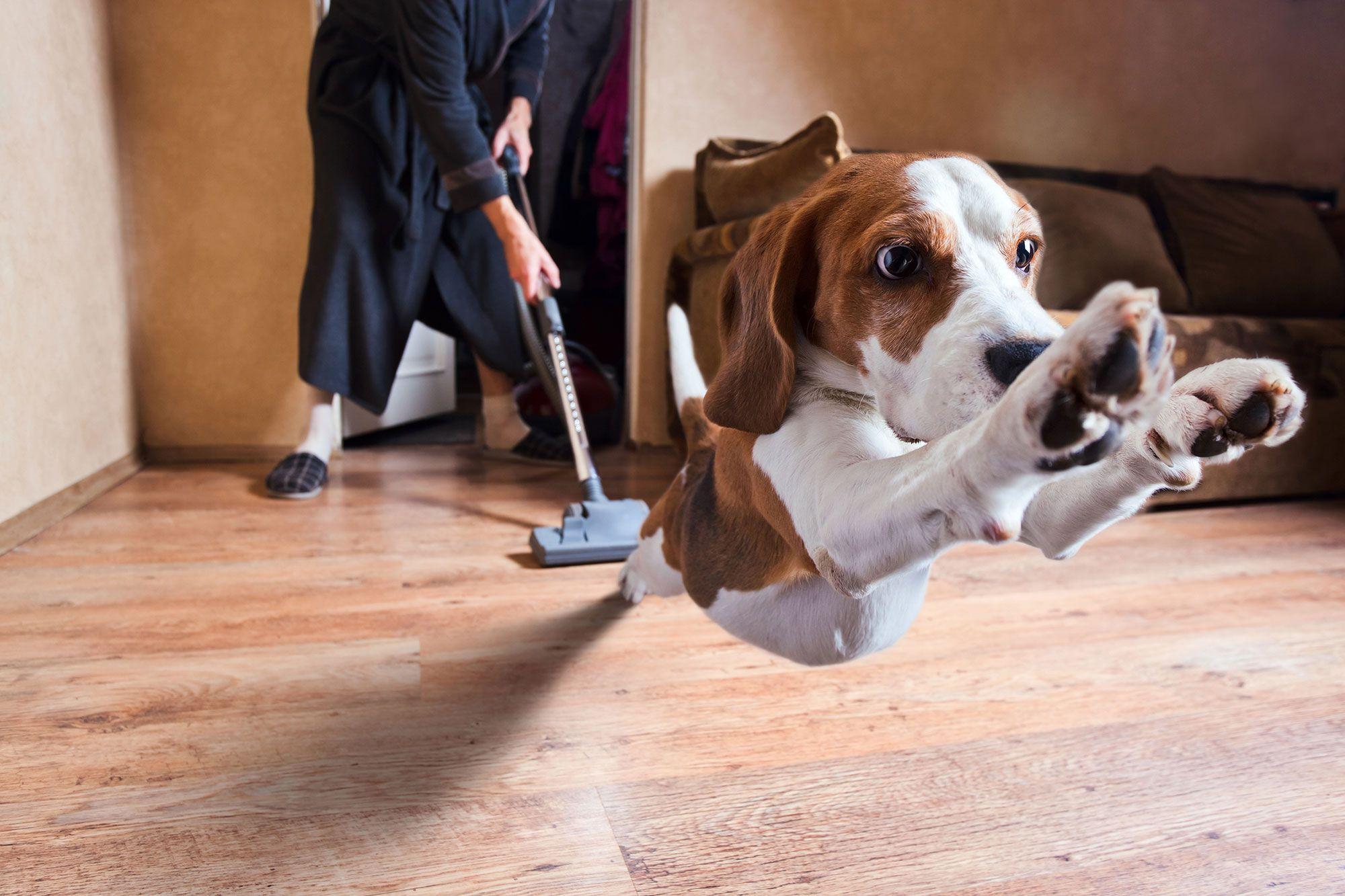 fobias perros