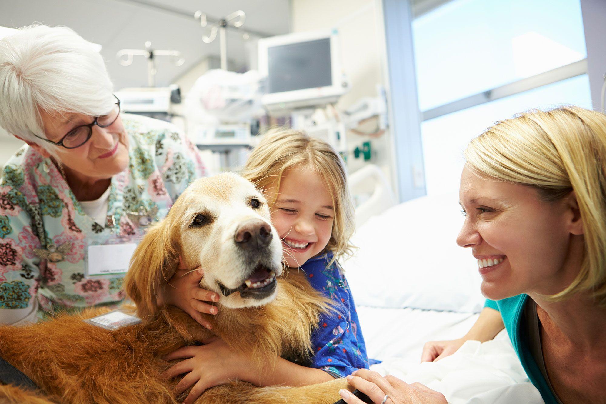 perros terapia asistida