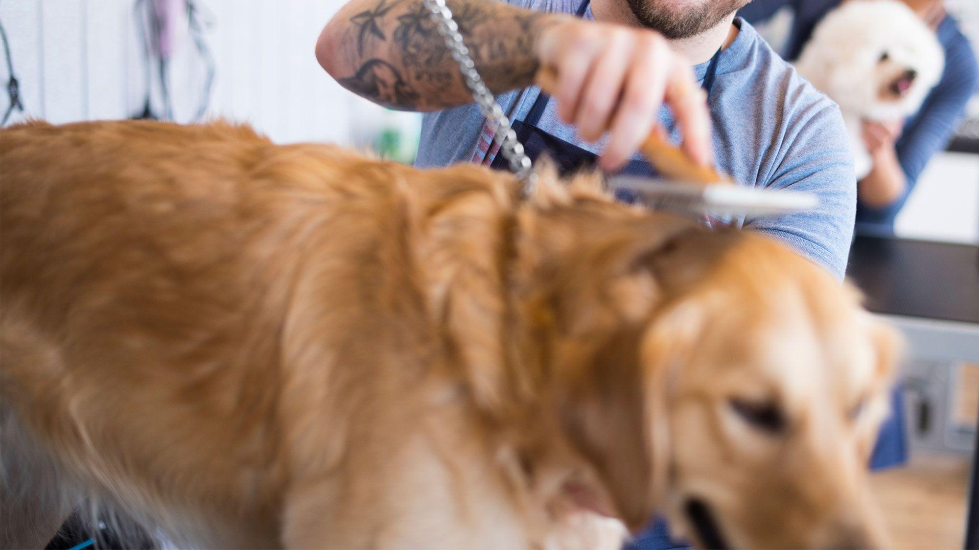 perros terapia asistida cárceles