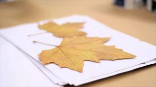 Pintar y decorar hojas secas - Paso 1