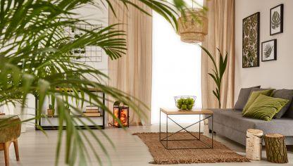 Helechos de interior hogarmania - Plantas decorativas interior ...
