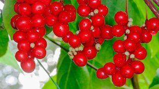 10 plantas medicinales para la salud de la mujer - Esquisandra