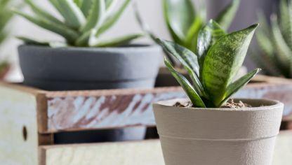 2 Plantas De Interior Muy Resistentes Decogarden - Plantas-de-interior-resistentes