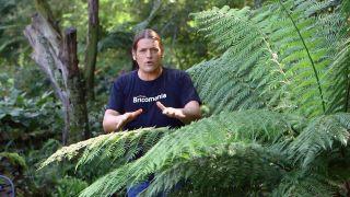 Reproducción del helecho arbóreo dicksonia antarctica  - Condiciones ambientales