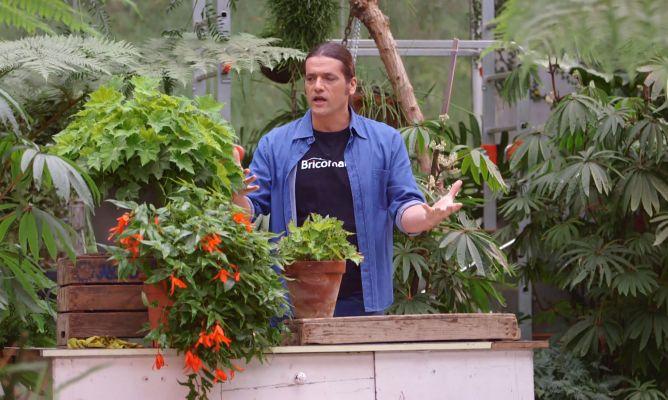 Los consejos de jardiner a del fin de semana 25 y 26 de - Consejos de jardineria ...