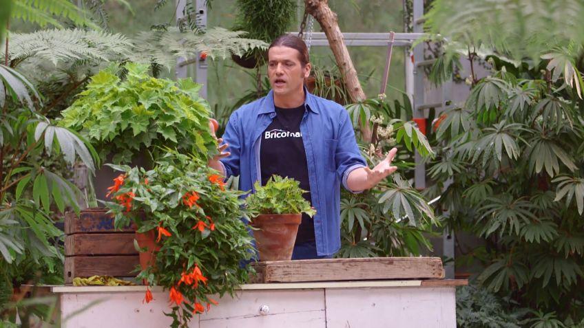 bricomania jardineria los consejos de jardinera del fin de semana 25 y 26 de noviembre de 2017 - Bricomania Jardineria