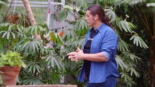 Begonia Luxurians - Entutorar