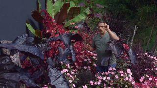 Parterre floral en tonos rosas y negros con alegrías guineanas y alocasias - Detalle final