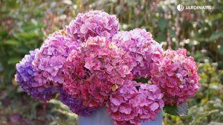 Cómo conseguir que las hortensias den flores hasta el otoño - Centro floral