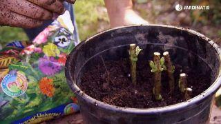 Cómo conseguir que las hortensias den flores hasta el otoño - Esquejes