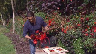 Identificar dalias en parterre - Centro floral