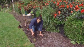 Ventajas de utilizar la corteza de pino - Nassella tenuissima