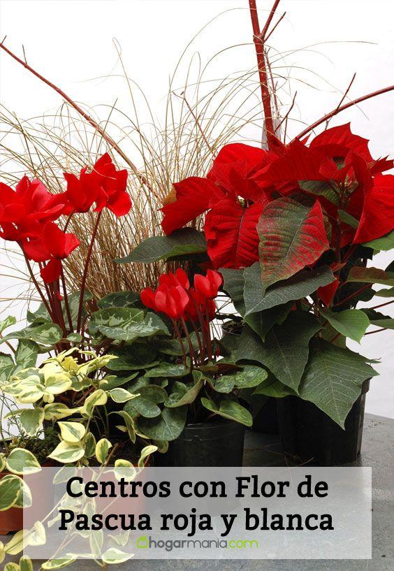 Materiales para crear un centro con Flor de Pascua roja y blanca