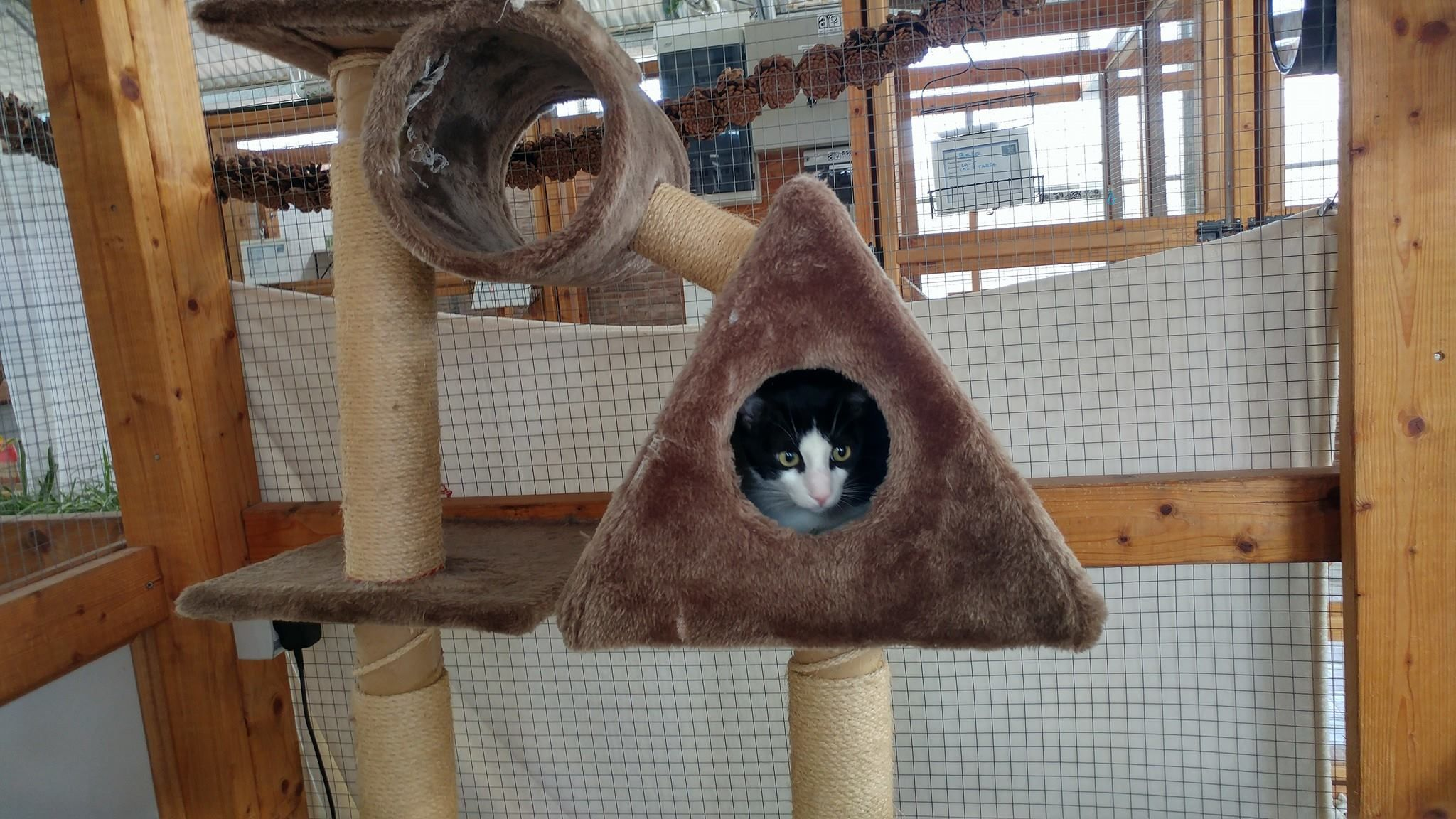 rascador hotel gatos