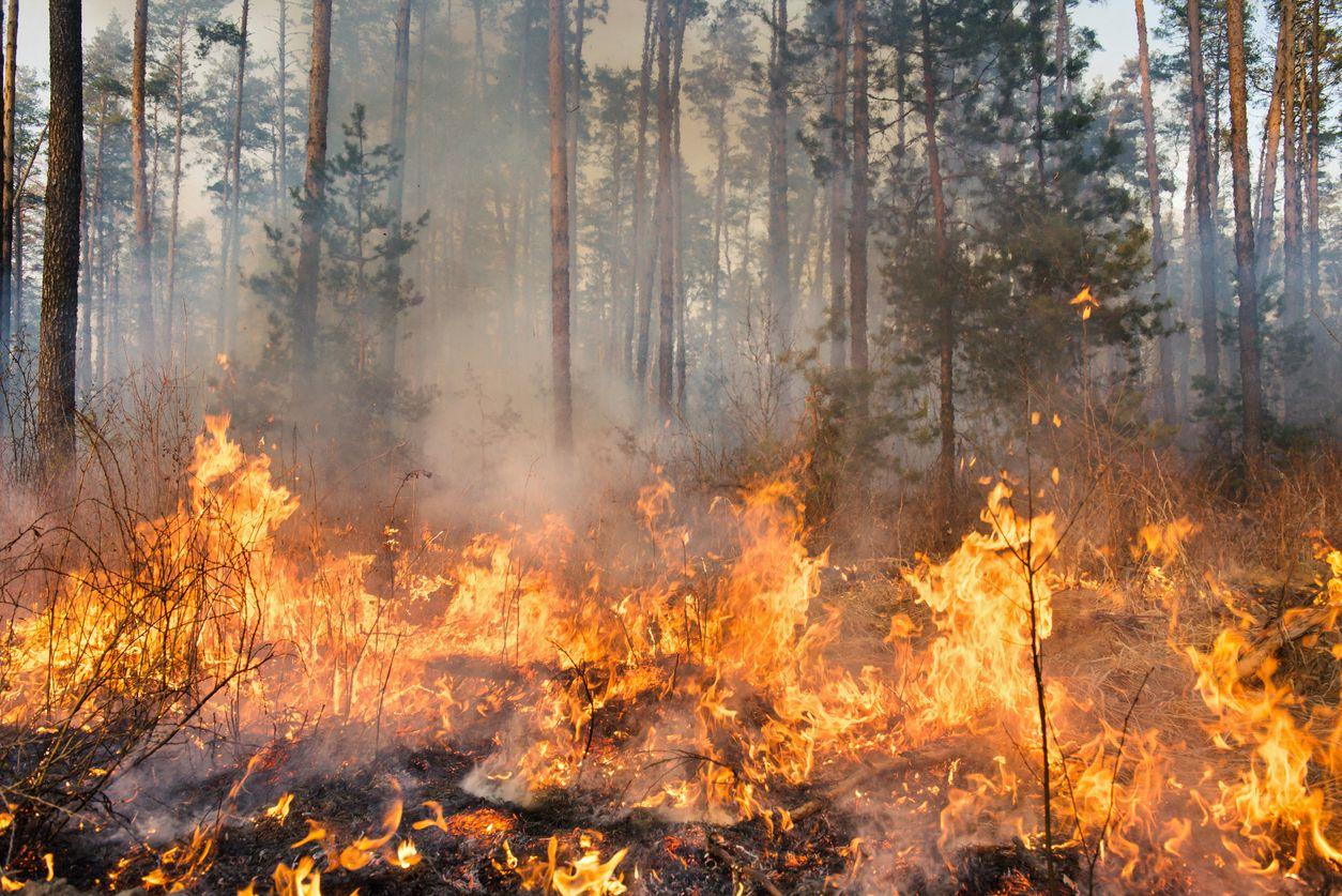 Reforestación de las zonas devastadas por incendios forestales
