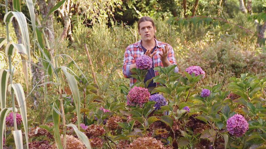 bricomania jardineria los consejos de jardinera del fin de semana 2 y 3 de diciembre de 2017 - Bricomania Jardineria