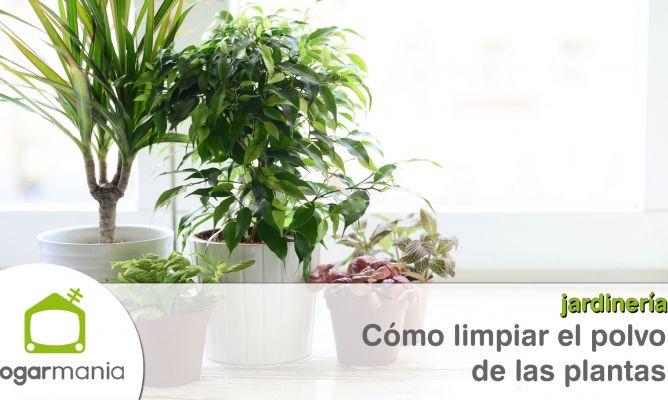 C mo limpiar el polvo de las plantas hogarmania - Como limpiar la casa rapido ...