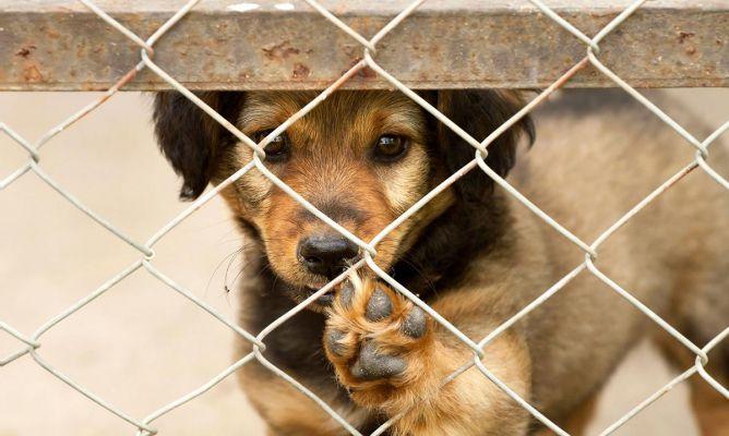 Resultado de imagen para mascotas en adopcion