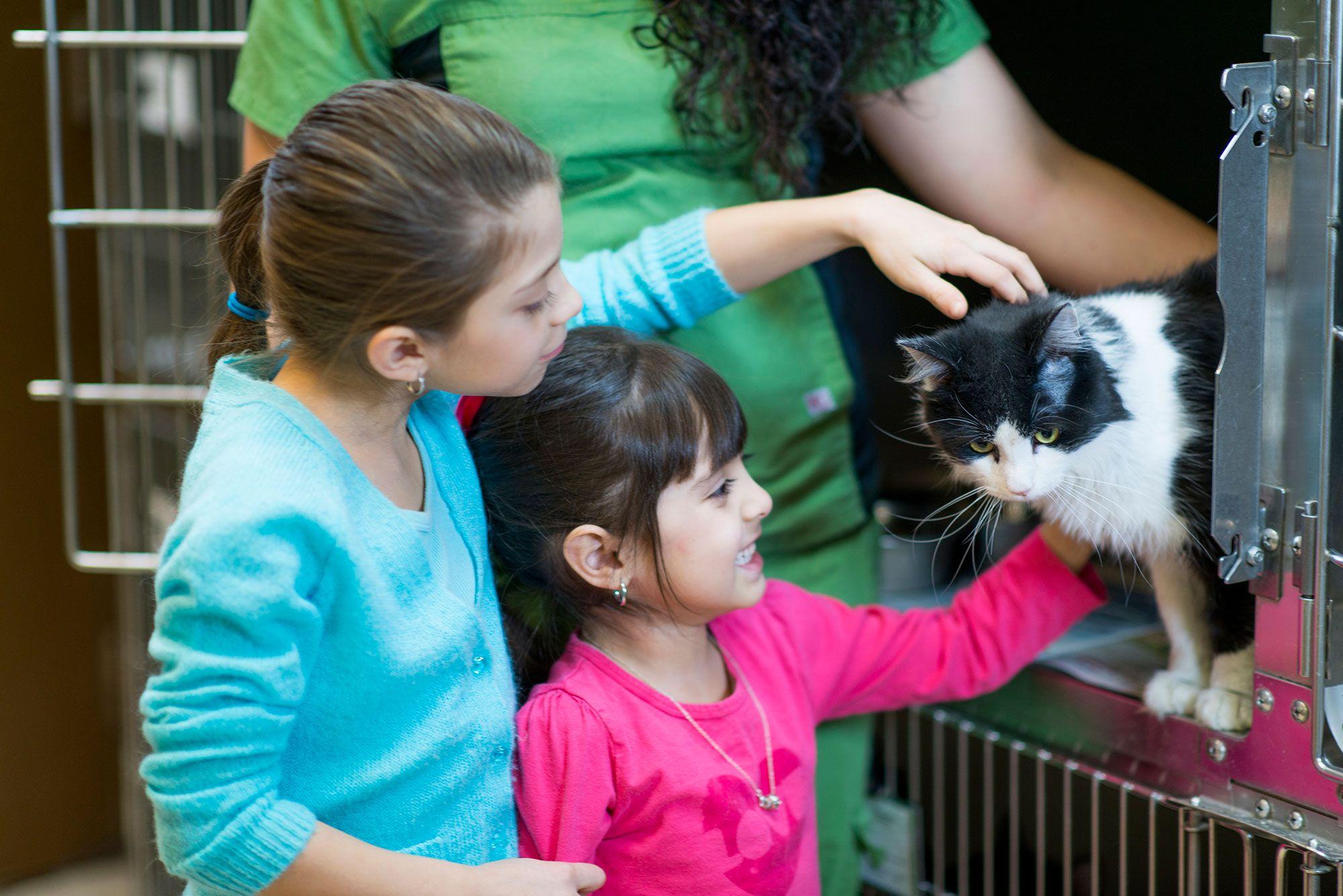 mascotas adopción