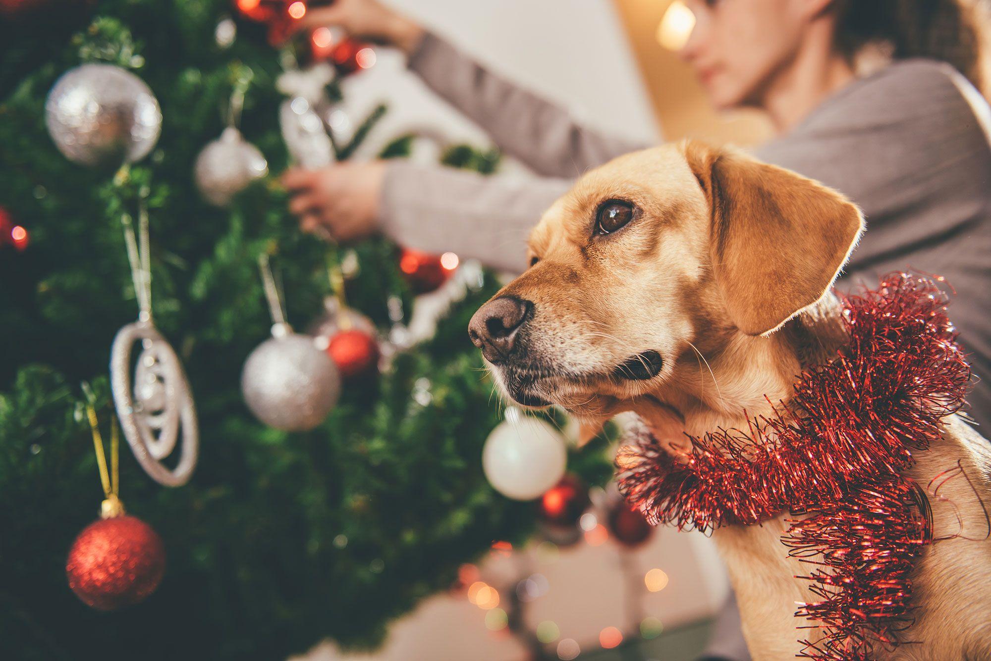 mascotas adornos navidad