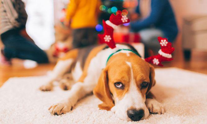 C mo evitar que la navidad estrese a tu mascota hogarmania for Como evitar los gatos en el jardin