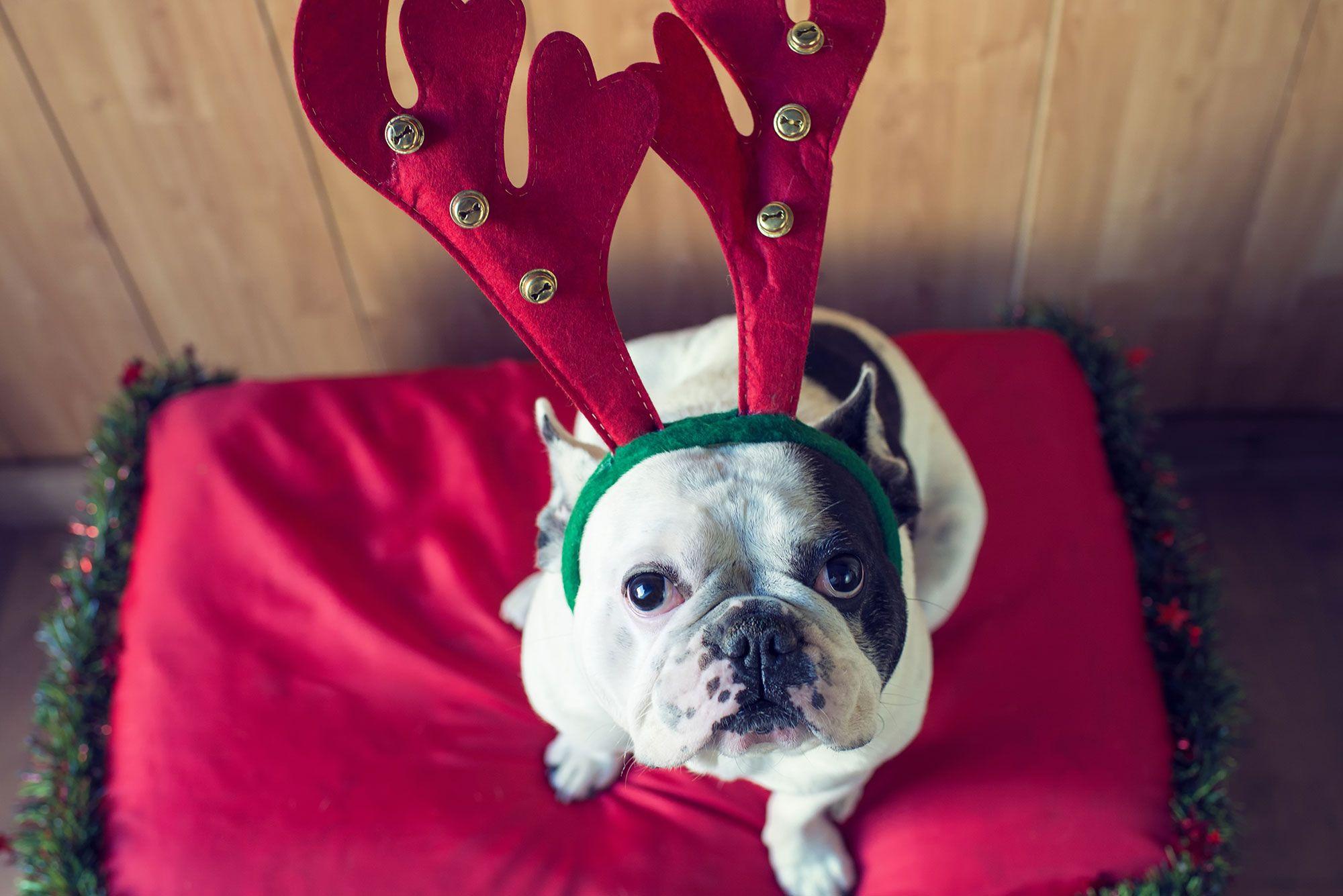 mascotas estrés navidad disfraces