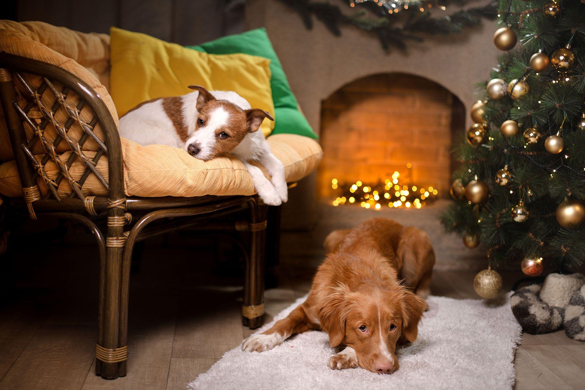 perros casa navidad