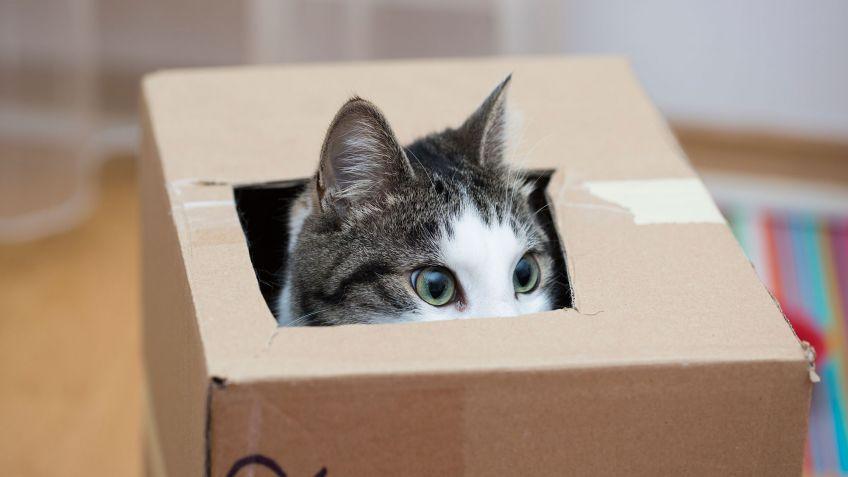 Resultado de imagen para gatos y perros cajas