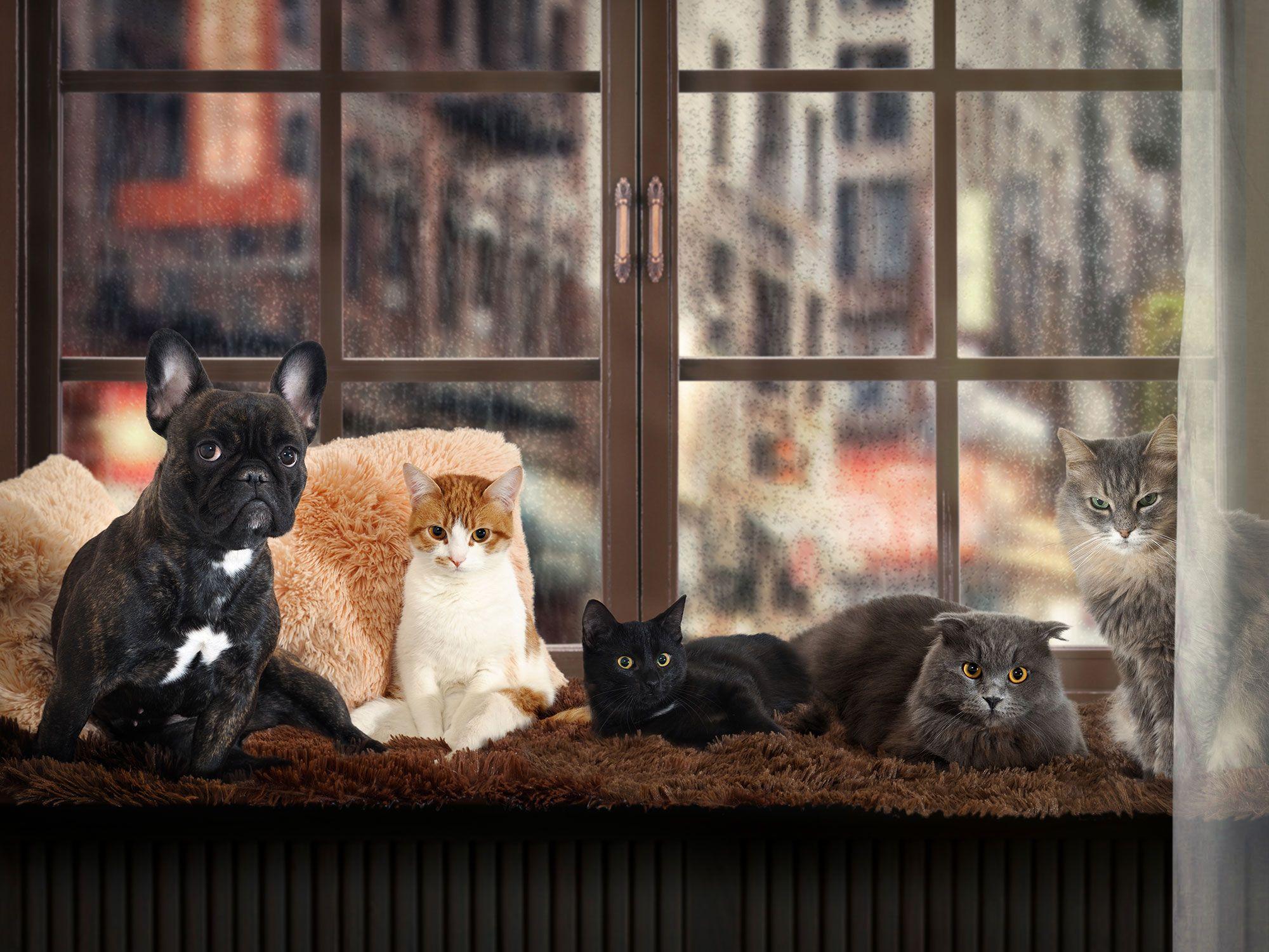mascotas visitas navidad