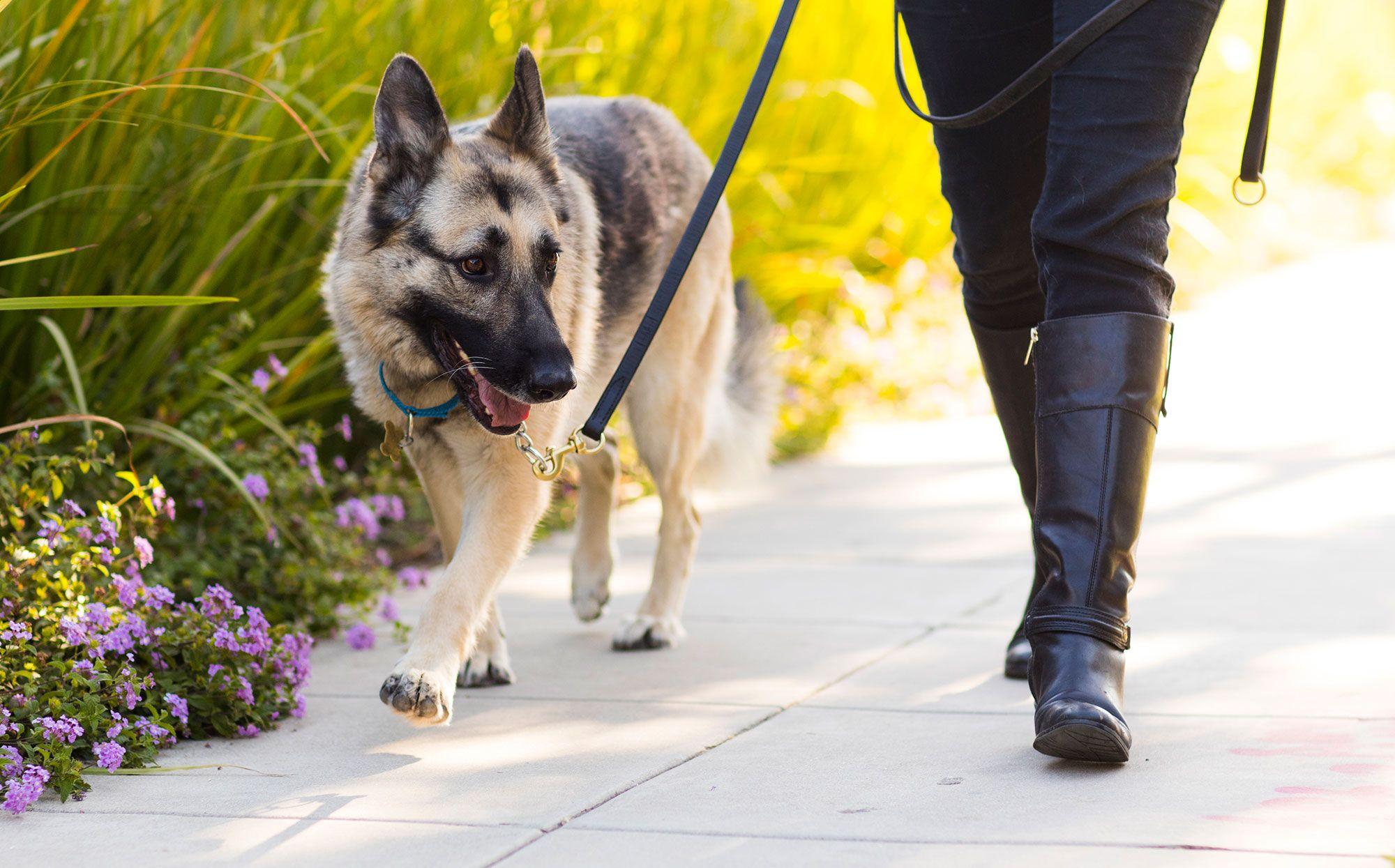 perro paseo