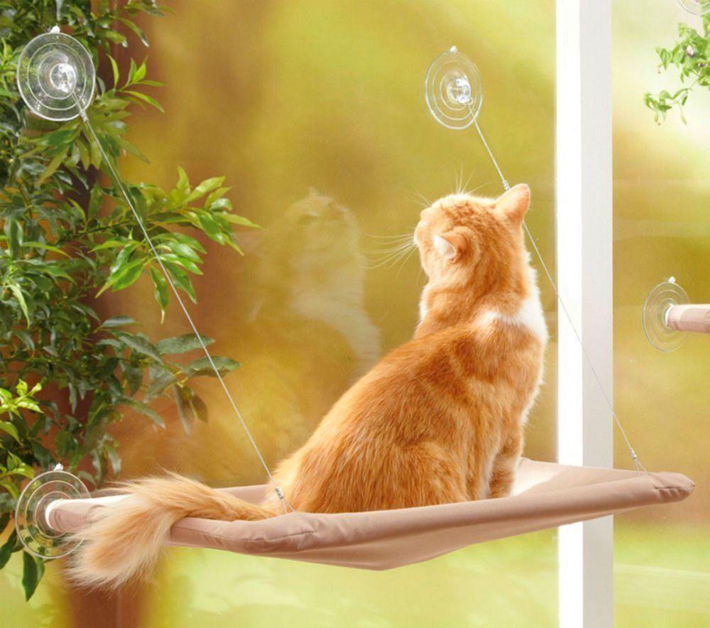cama gato ventana