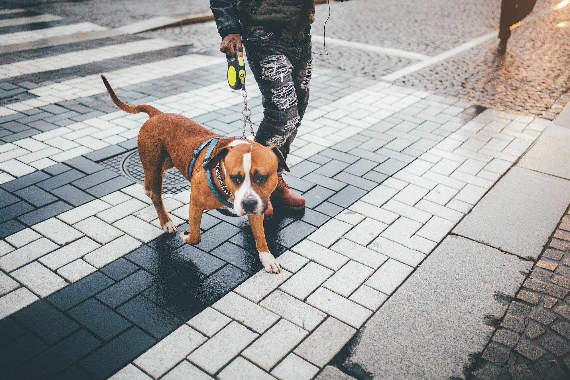 licencia perros potencialmente peligrosos