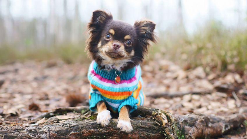 Hacer ropa para mascotas - Hogarmania
