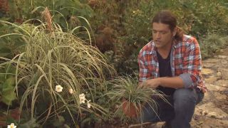 Cómo utilizar el carex en el jardín - Carex Everest