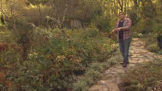Cómo utilizar el carex en el jardín - Parterre