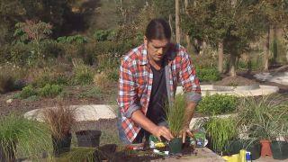 Cómo utilizar el carex en el jardín - Plantación