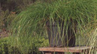 Cómo utilizar el carex en el jardín - Variedades zonas húmedas