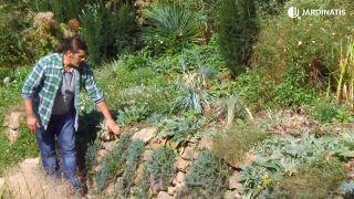 Plantas para muros y paredes verticales - Sedum
