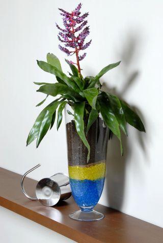 Composición floral con bromelia en recipiente con geles de colores - Detalle