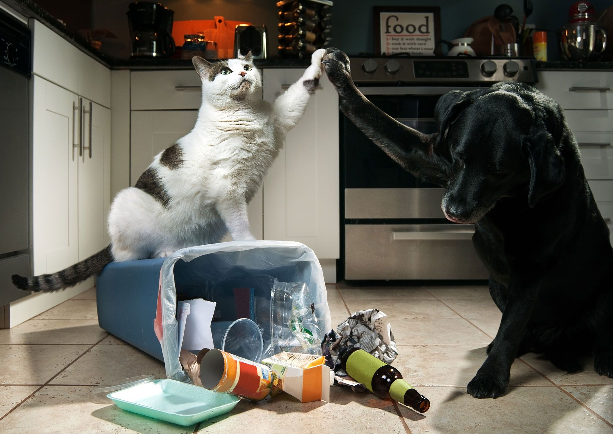 basura mascotas