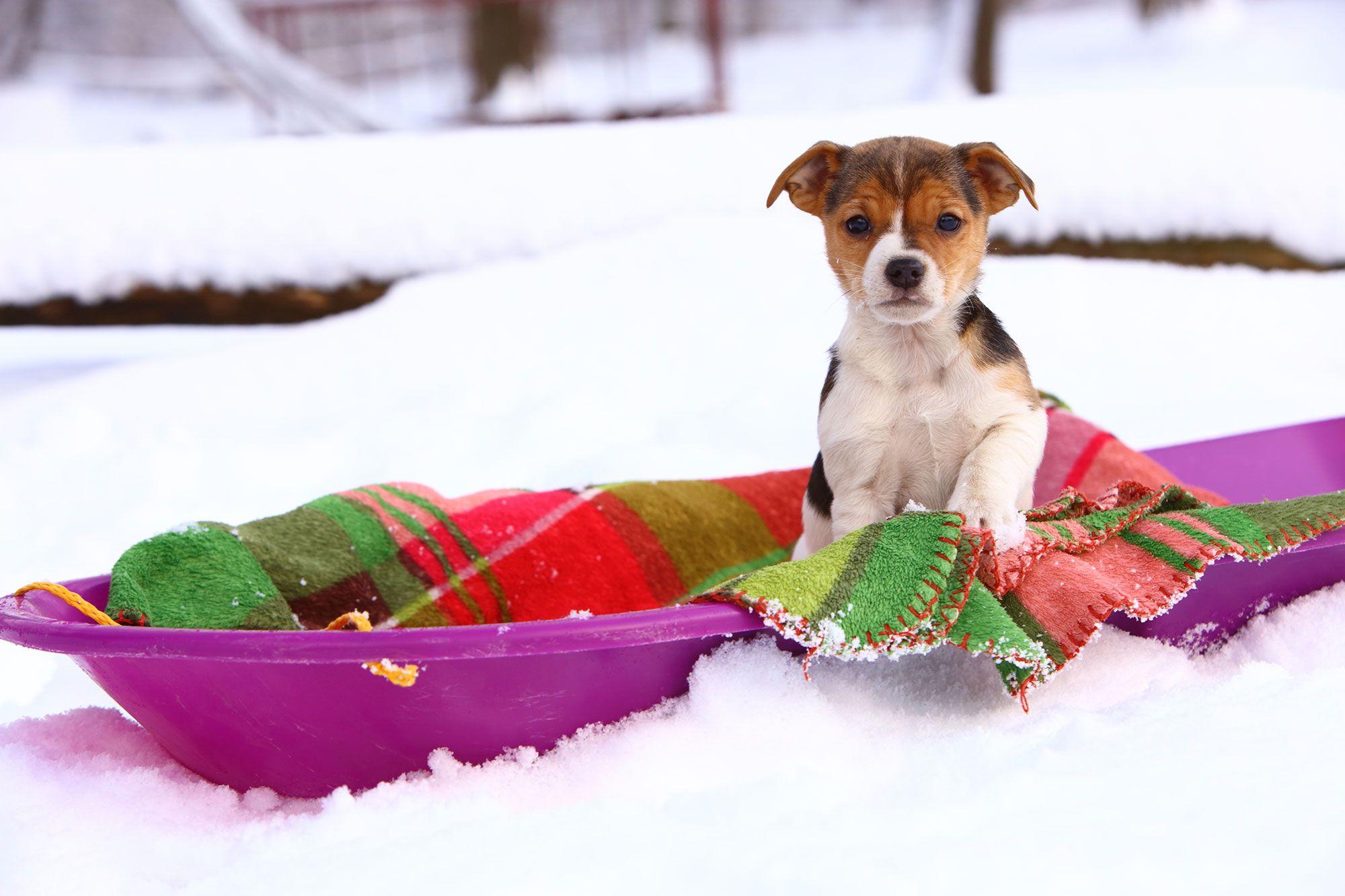 hipotermia mascotas