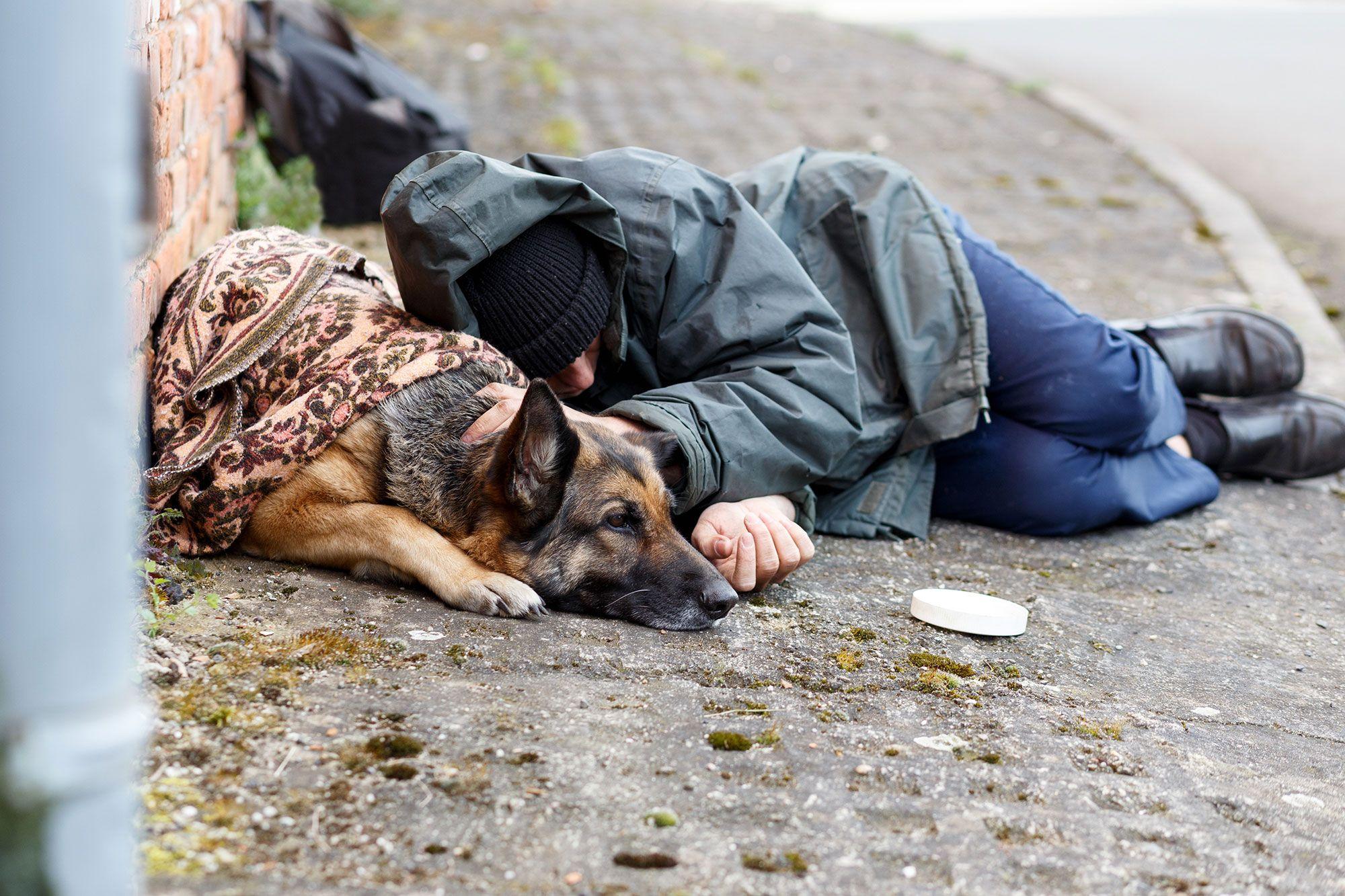 indigentes mascotas