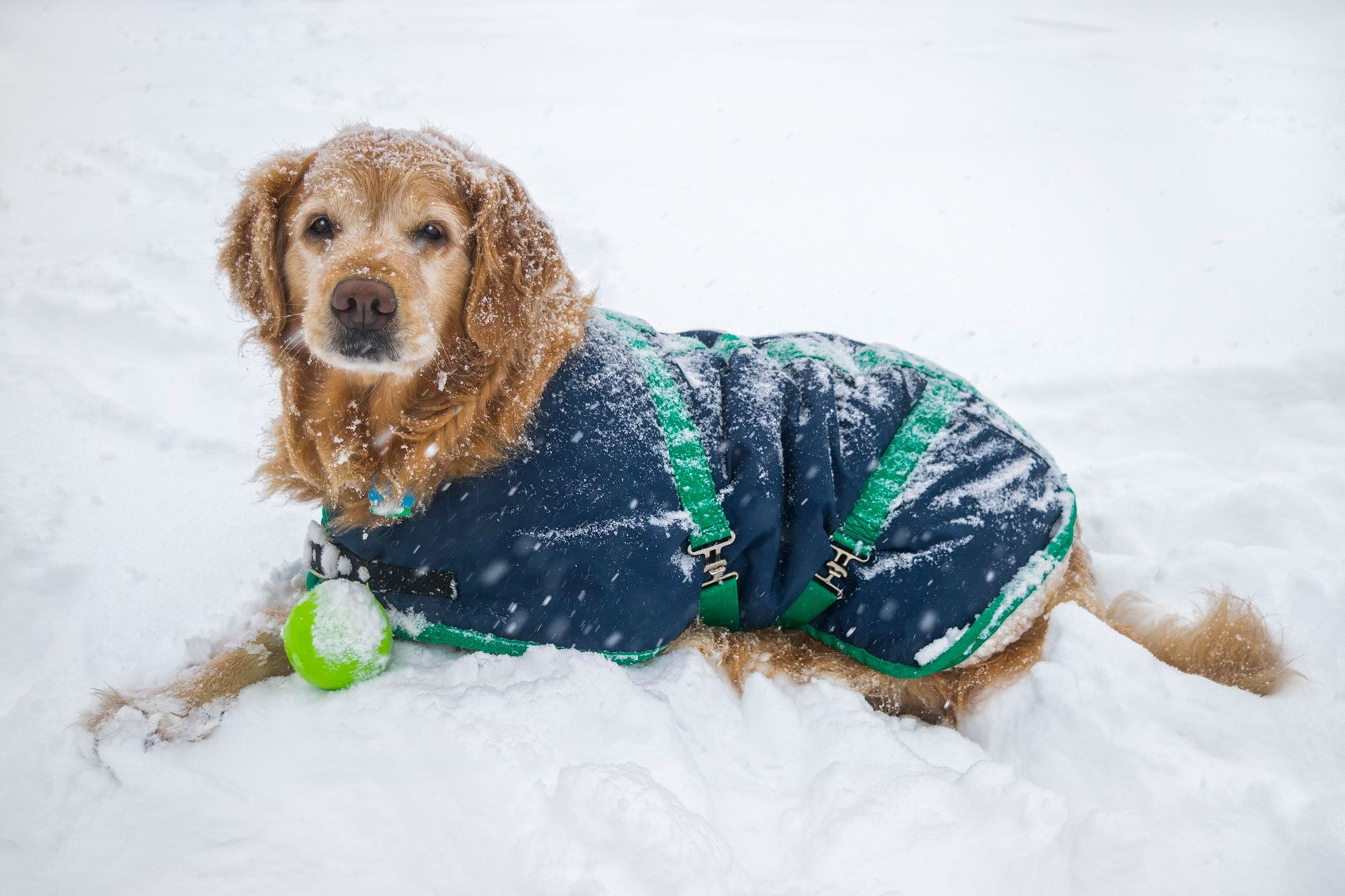C mo cuidar el pelo de tu perro en invierno hogarmania - Casas para perros pequenos ...
