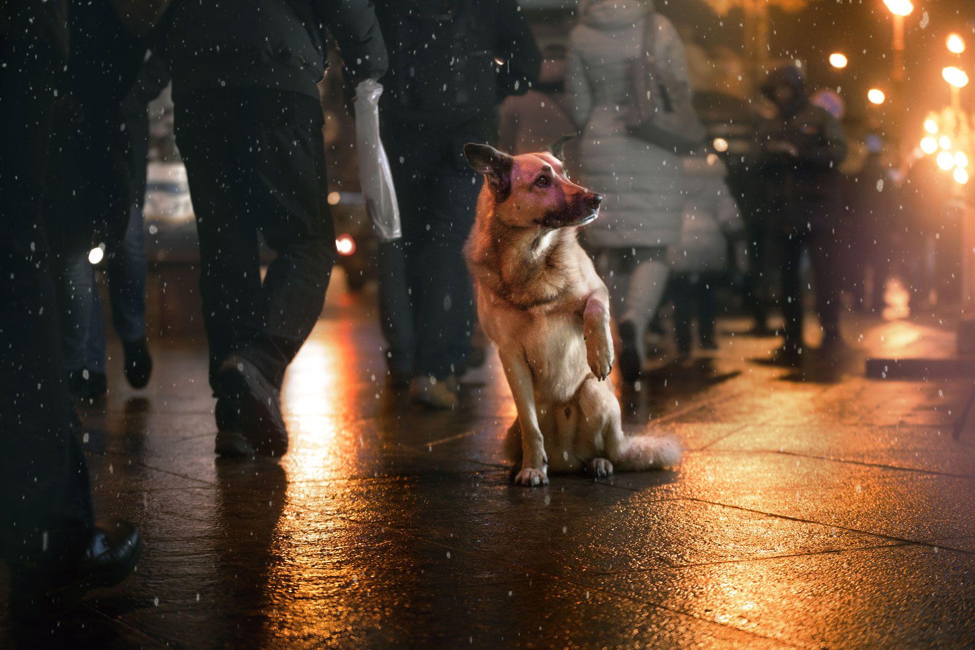perro nochevieja