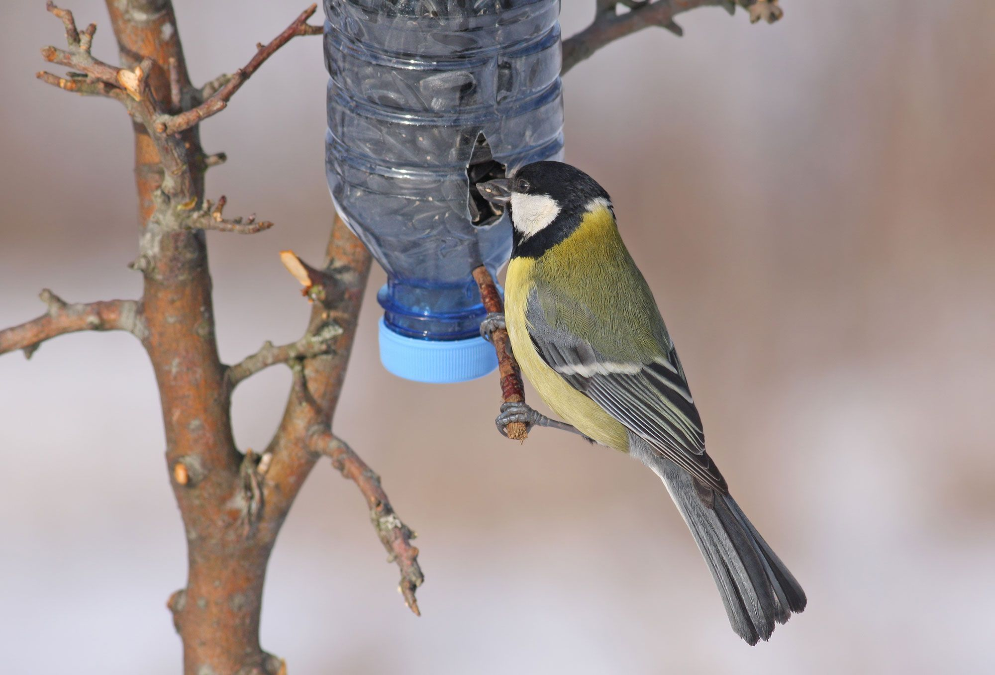 comedero pájaro
