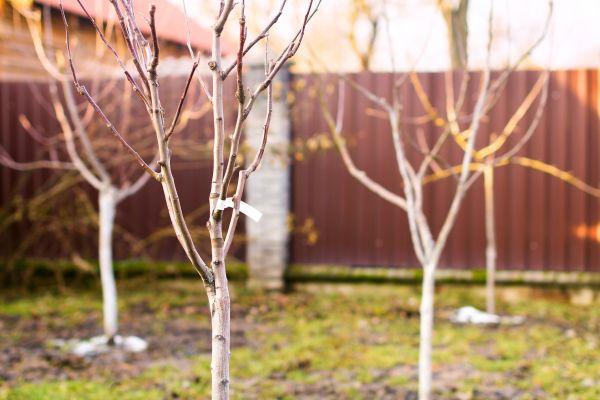 Cuidado de los árboles frutales