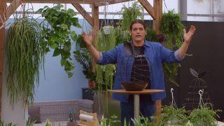 Composición con plantas colgantes que necesitan poca tierra - Inicio