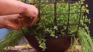 Composición con plantas colgantes que necesitan poca tierra - Ramas