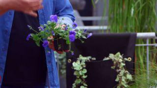 Jardineras de tela para el balcón - Viola péndula