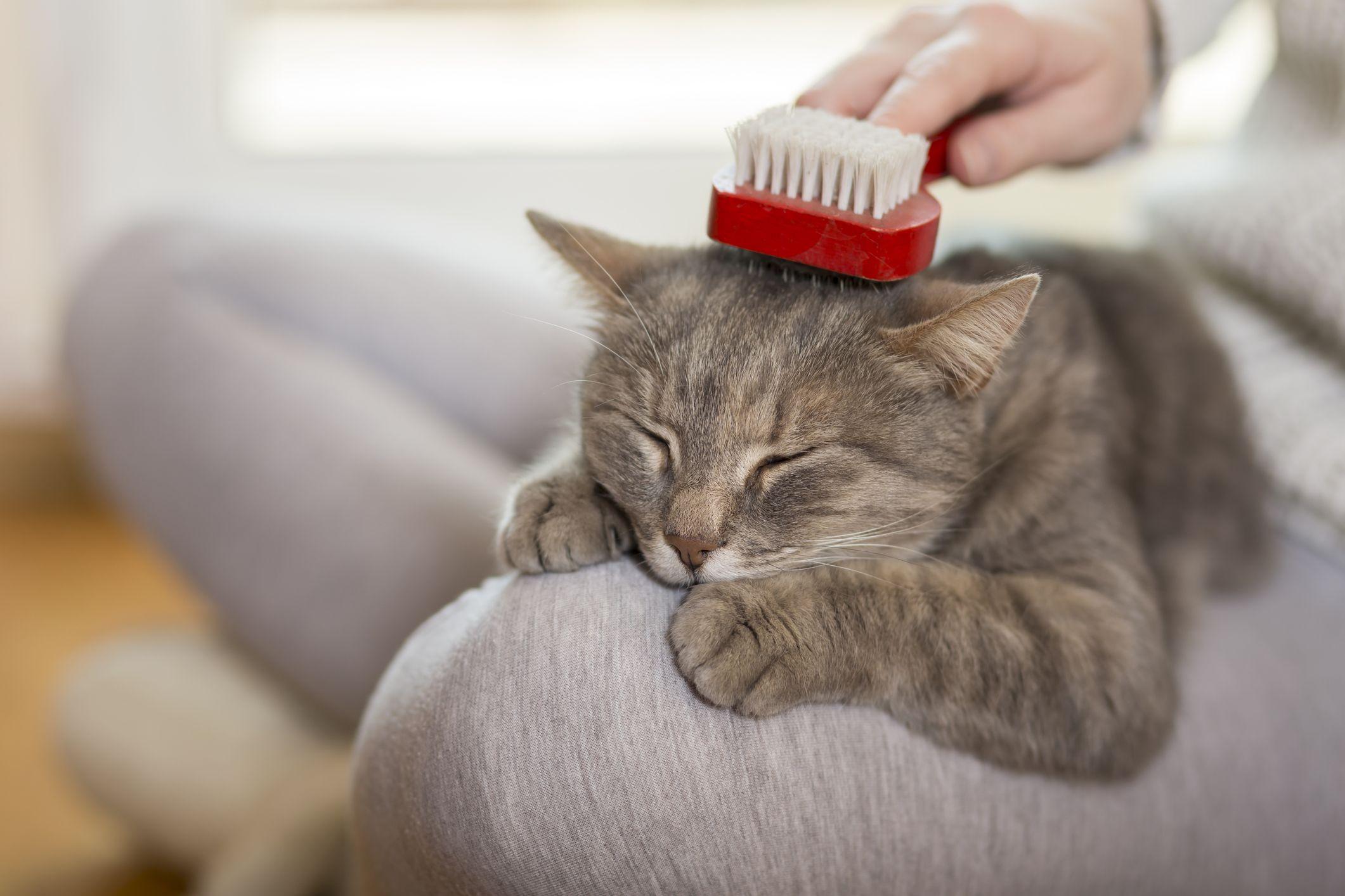 cepillar al gato
